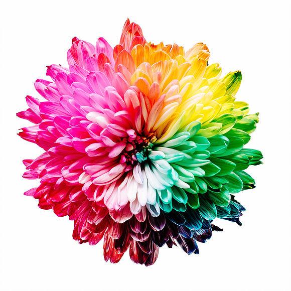 fleurs-multi